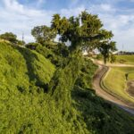 A lone tree on a hillside covered in kudzu